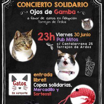 Solidario. Gatos en Adopción